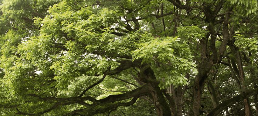 la nscita degli alberi secondo Ovidio Pierucci Agricoltura