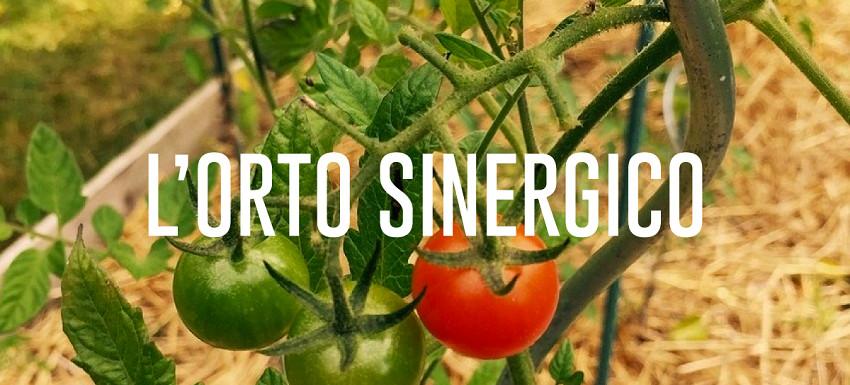 L'orto sinergico: cos'è e come funziona - Pierucci Agricoltura