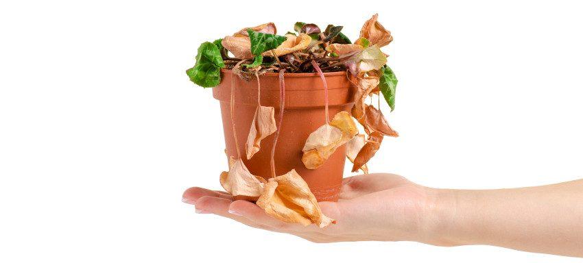 Come annaffiare le piante quando vai in vacanza - Pierucci Agricoltura