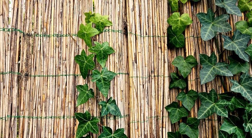 Come organizzare una perfetta grigliata in giardino - Pierucci Agricoltura-4