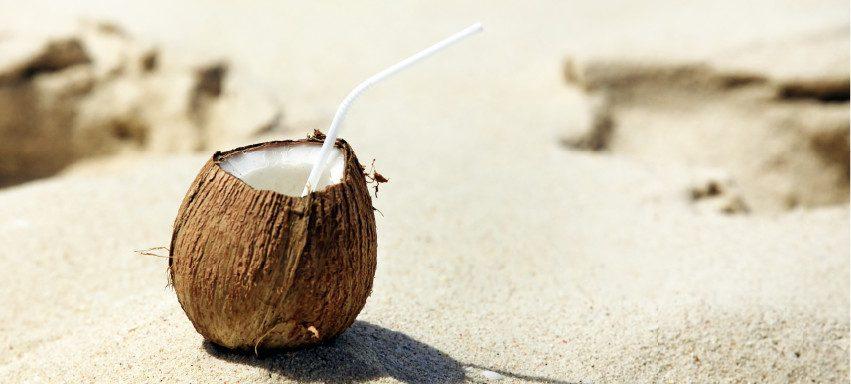 La fibra di cocco: cos'è e come si utilizza - Pierucci Agricoltura