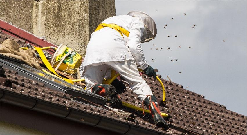 Professionista che esegue una disinfestazione dalle vespe - Come allontanare le vespe da casa tua