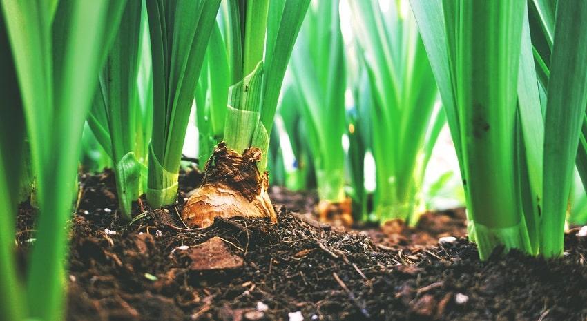 Piantine che crescono nella terra - Concimi NPK: caratteristiche e utilizzo