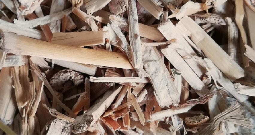 Miscanthus - La pacciamatura con materiali naturali: quali sono i migliori? - Pierucci Agricoltura
