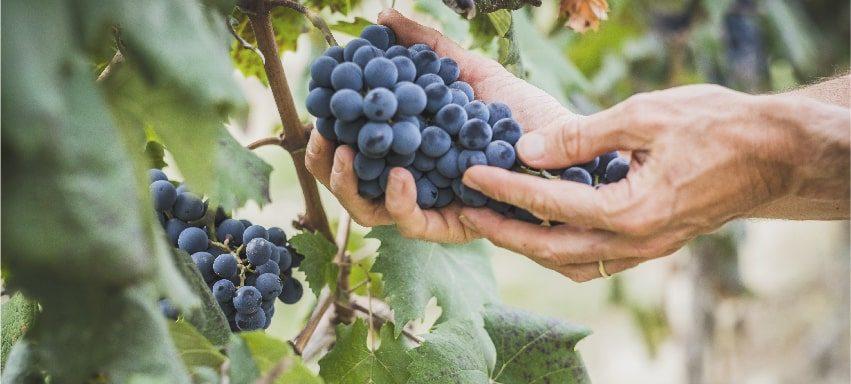 10 consigli su come fare il vino in casa